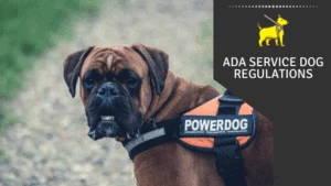 ADA Service Dog Regulations