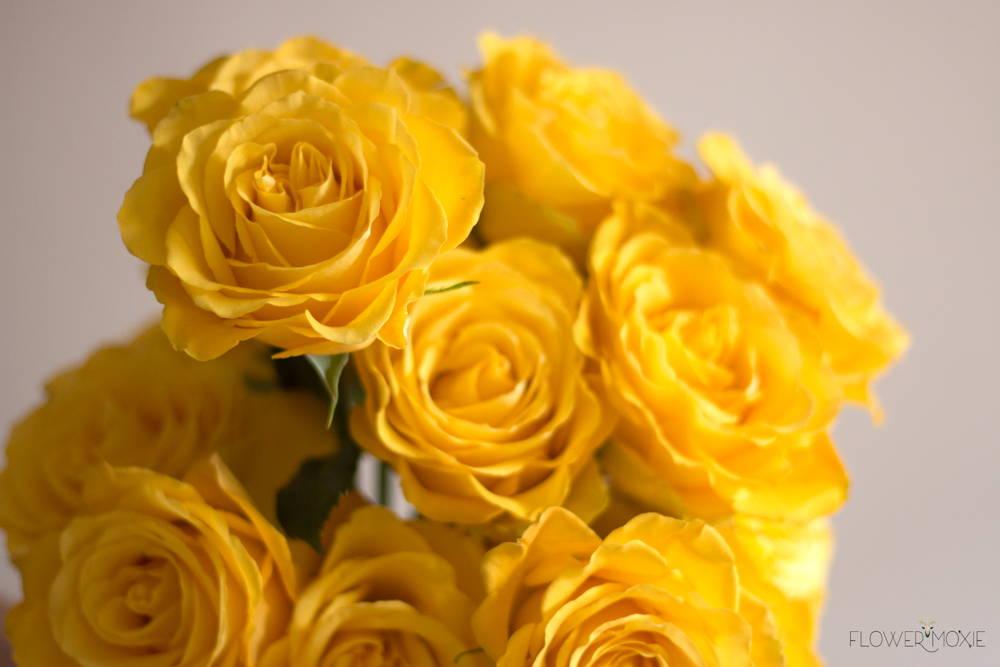 Bikini Yellow Roses
