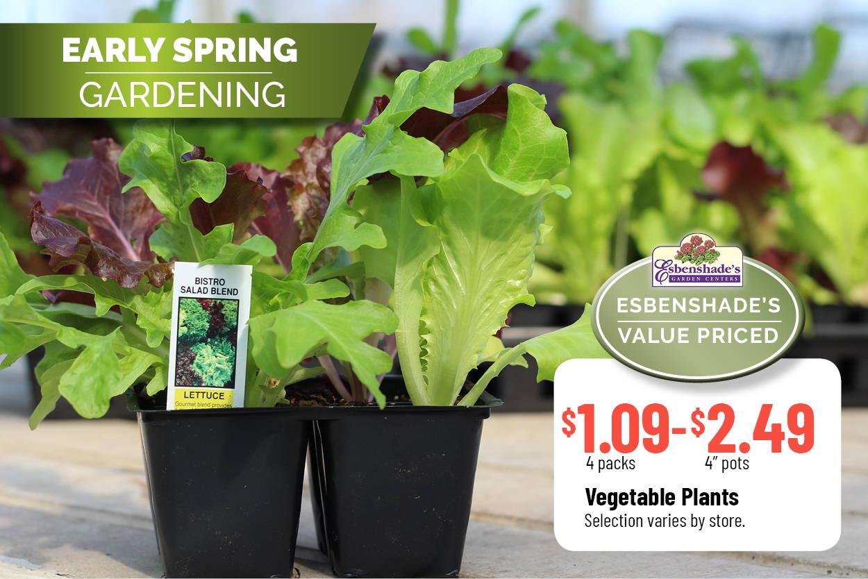 Vegetable Plants $1.09 - $2.49