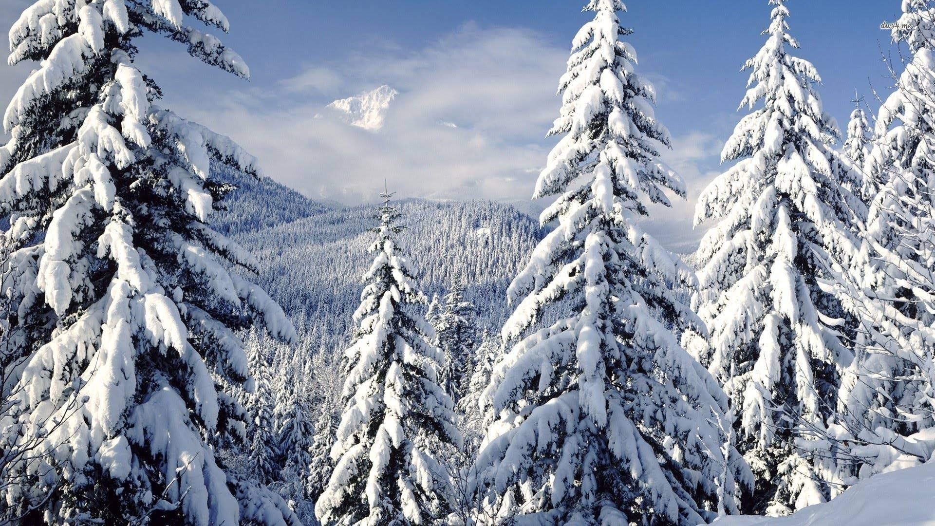 Beautiful snow on evergreen trees and mountains