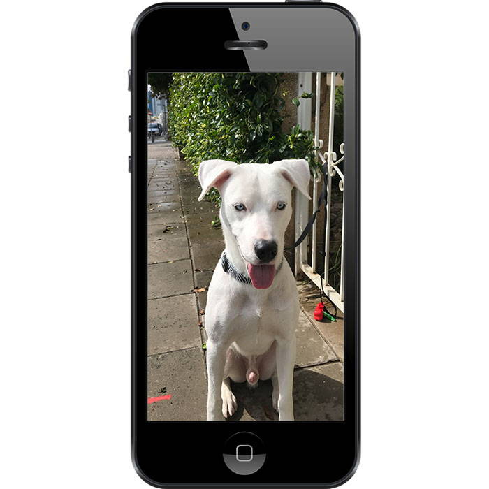 white_dog_boompup_photo_guide