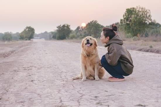 A Golden retriever and a woman sitting on a dirt road during a late evening