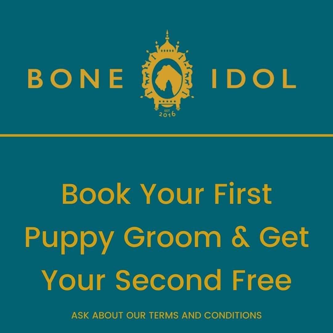 Bone Idol Puppy Grooming Package, free dog grooming, Brighton, East Sussex