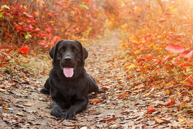 Dog Gut Health: The 4 Ways to Restore It Naturally