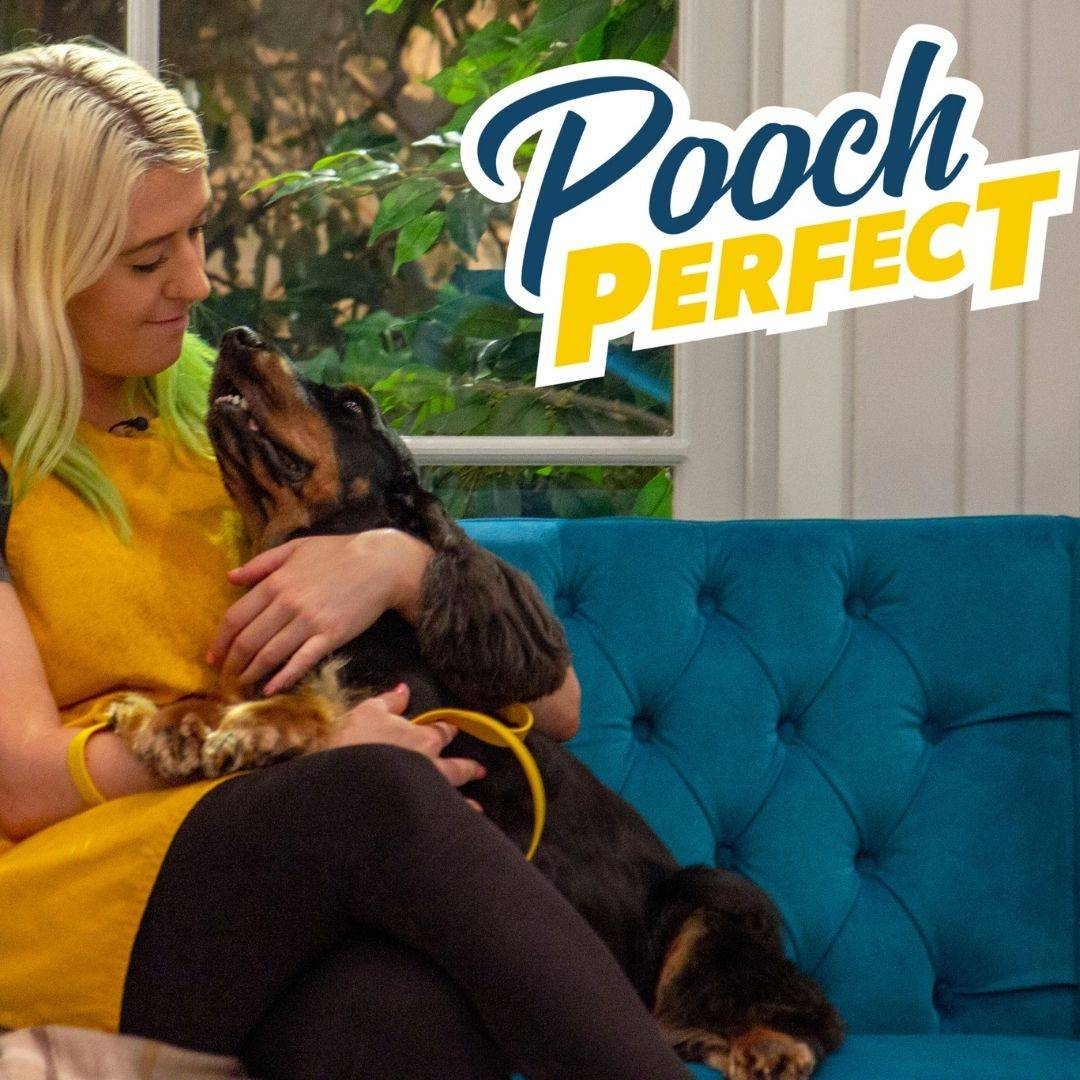 Helen & Teddy on Pooch Perfect, BBC1, Dog Groomer, Helen Kirby, Brighton & Hove, East Sussex