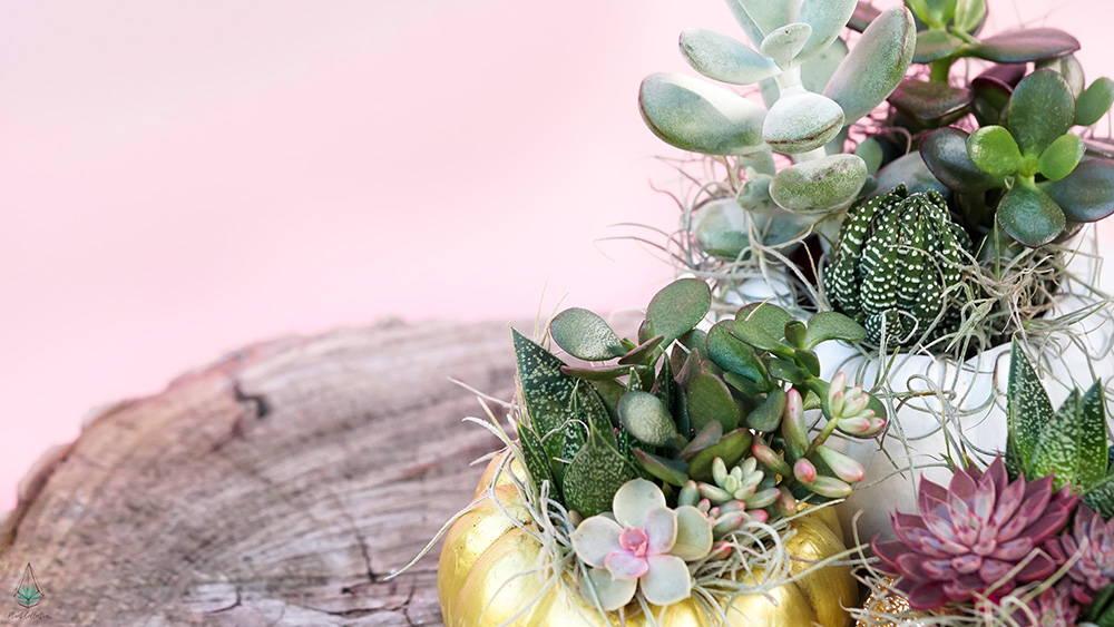 DIY succulent and moss pumpkin