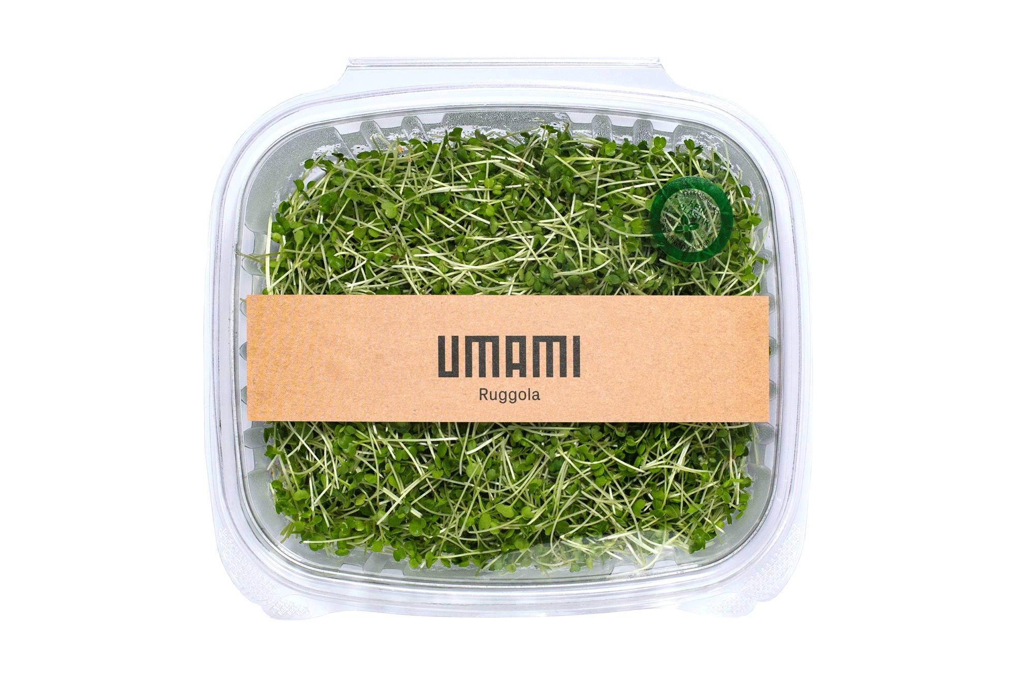Microgreens Arugula Ruccola Rocket. Tasty nutritious Greens.