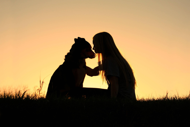 Lymphoma and Your Dog – HelpingPetsLiveLonger com
