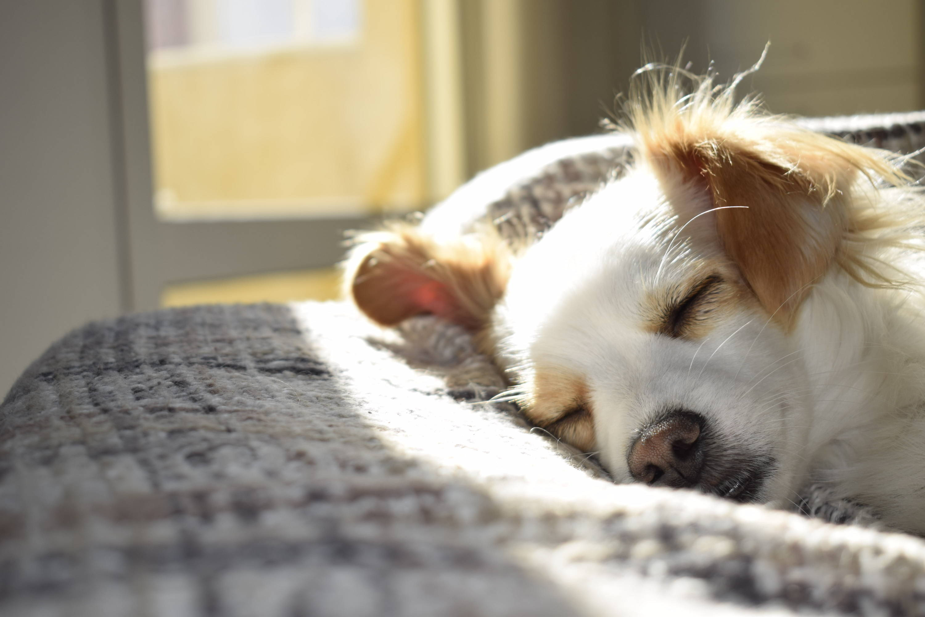 5 Tell-Tale Signs That Your Dog Is Sick - Team K9