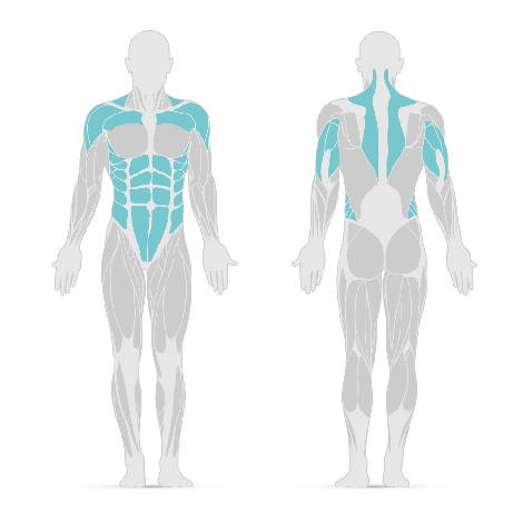 Grafik mit den Muskeln, die beim Schulterdrücken trainiert werden