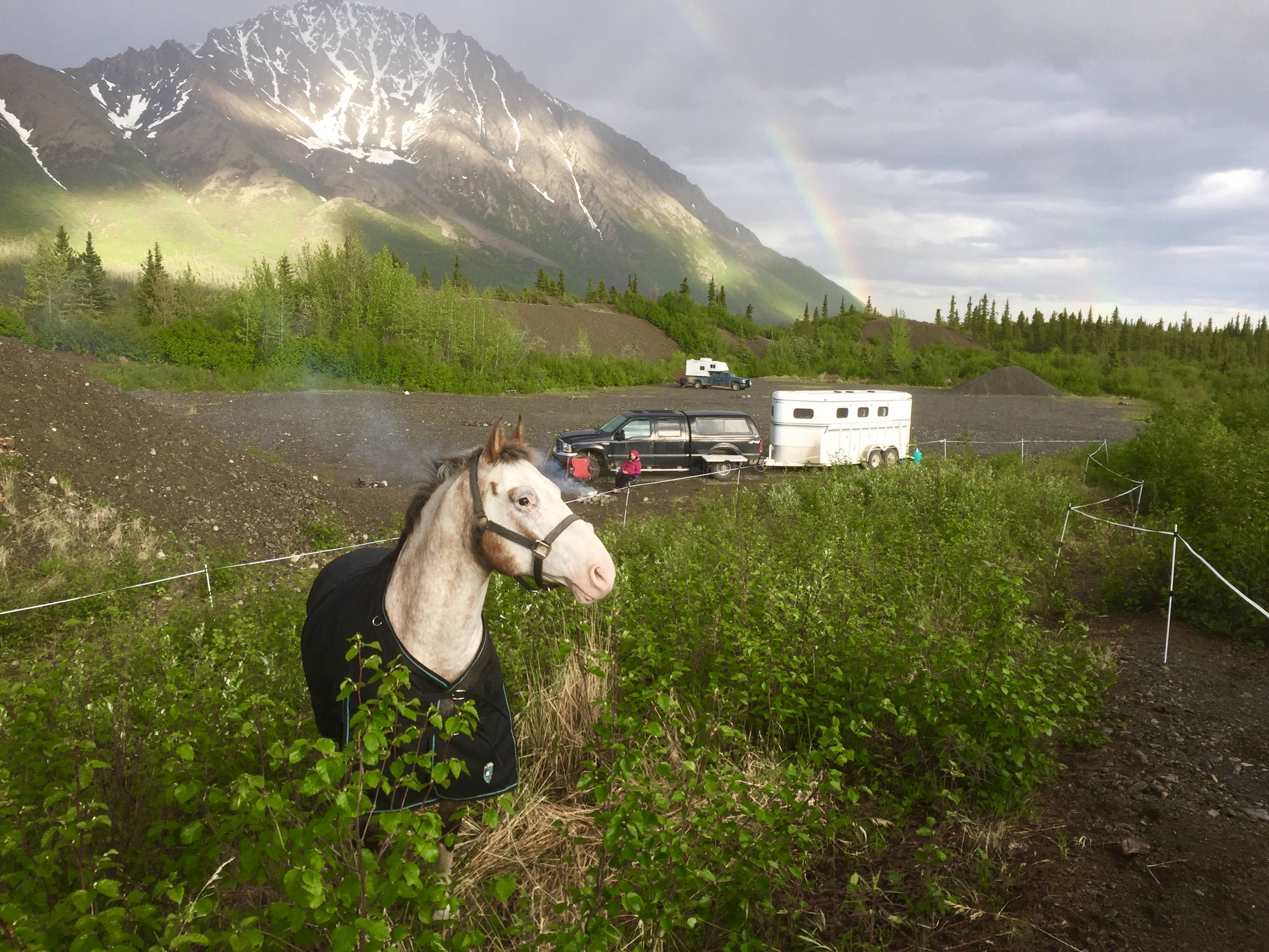 Arctic Horse horse camping denali alaska windy creek camping with horses