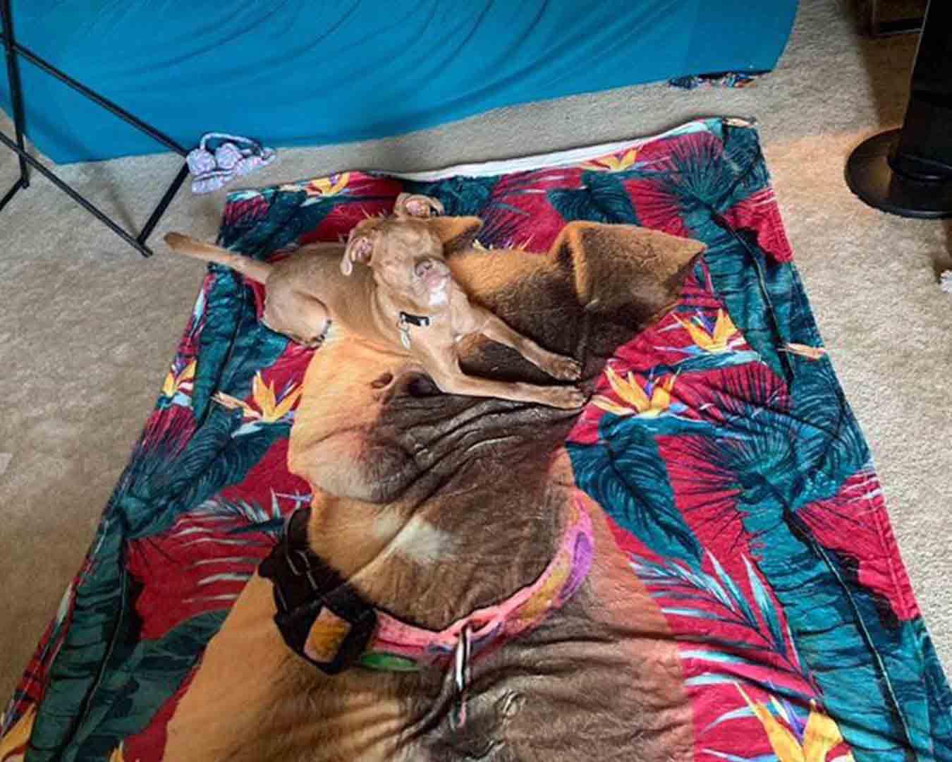 blind_dog_custom_print_fleece_blanket