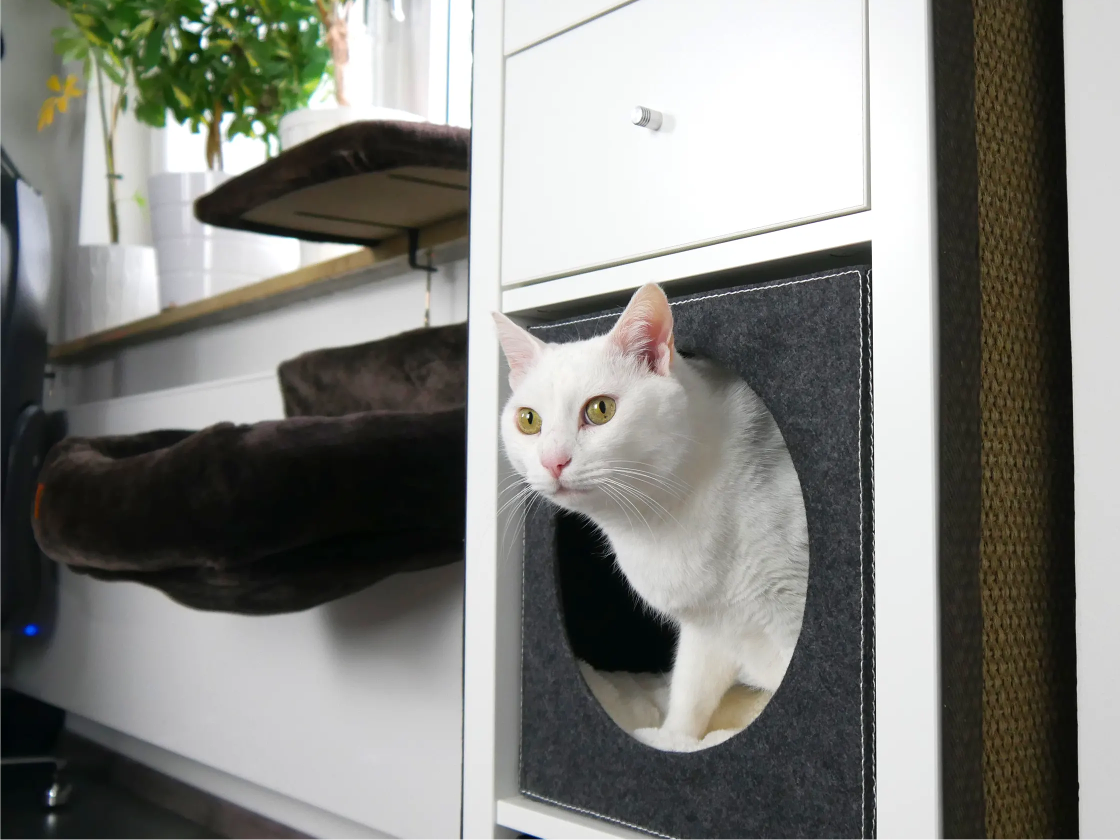 Katzen-Ratgeber - Ausstattung