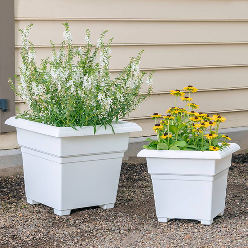 Flowers growing in 2 white countryside tub planters
