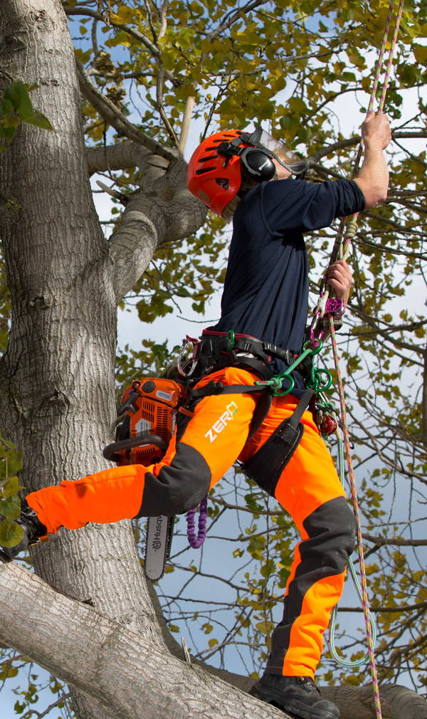 Clogger Zero Chainsaw Pants in Action