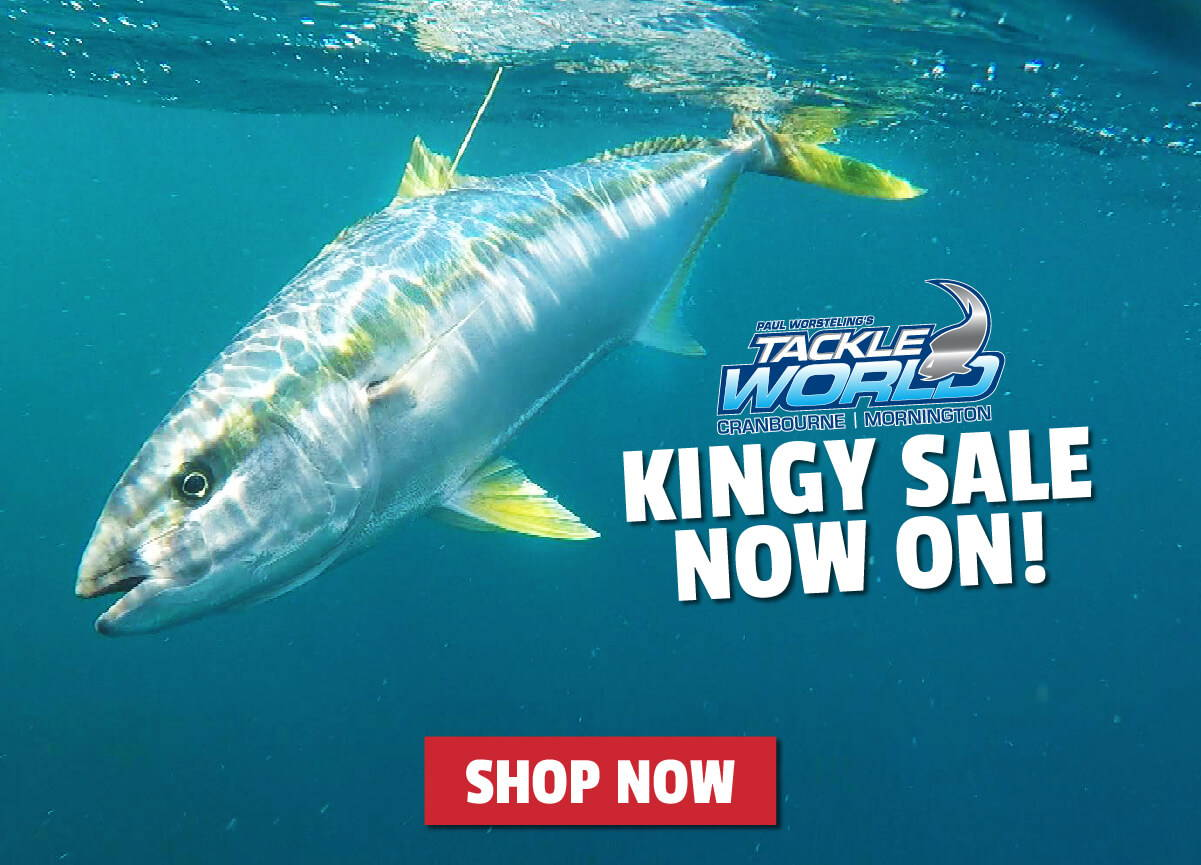 Kingy Sale Now On