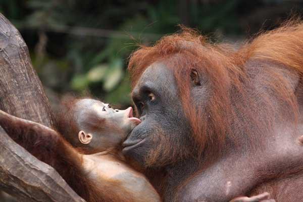 Travelbay Borneo Tours