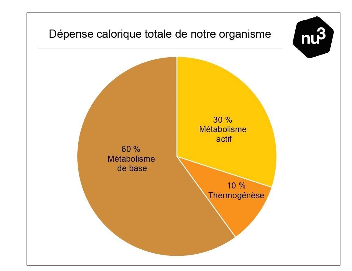 Dépense calorique