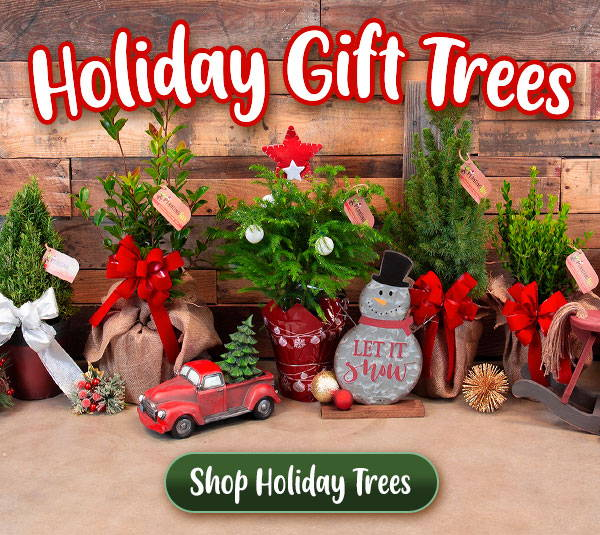 Holiday Gift Trees for Sale