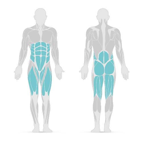 Squat : groupes musculaires ciblés