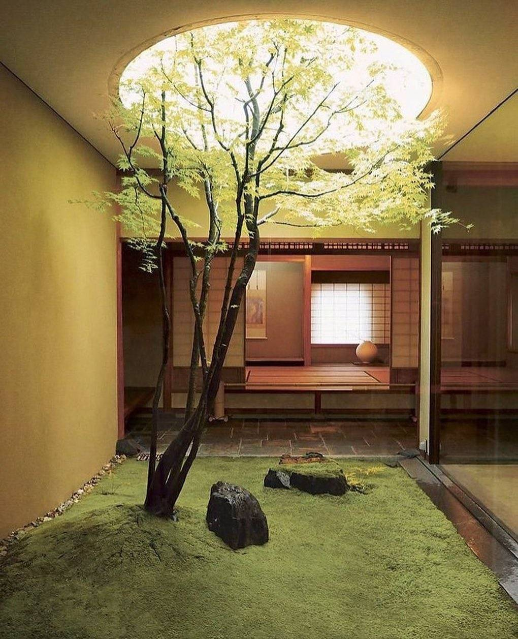 Outdoor alcove with Tree peaking out of skylight