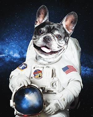 dog astronaut