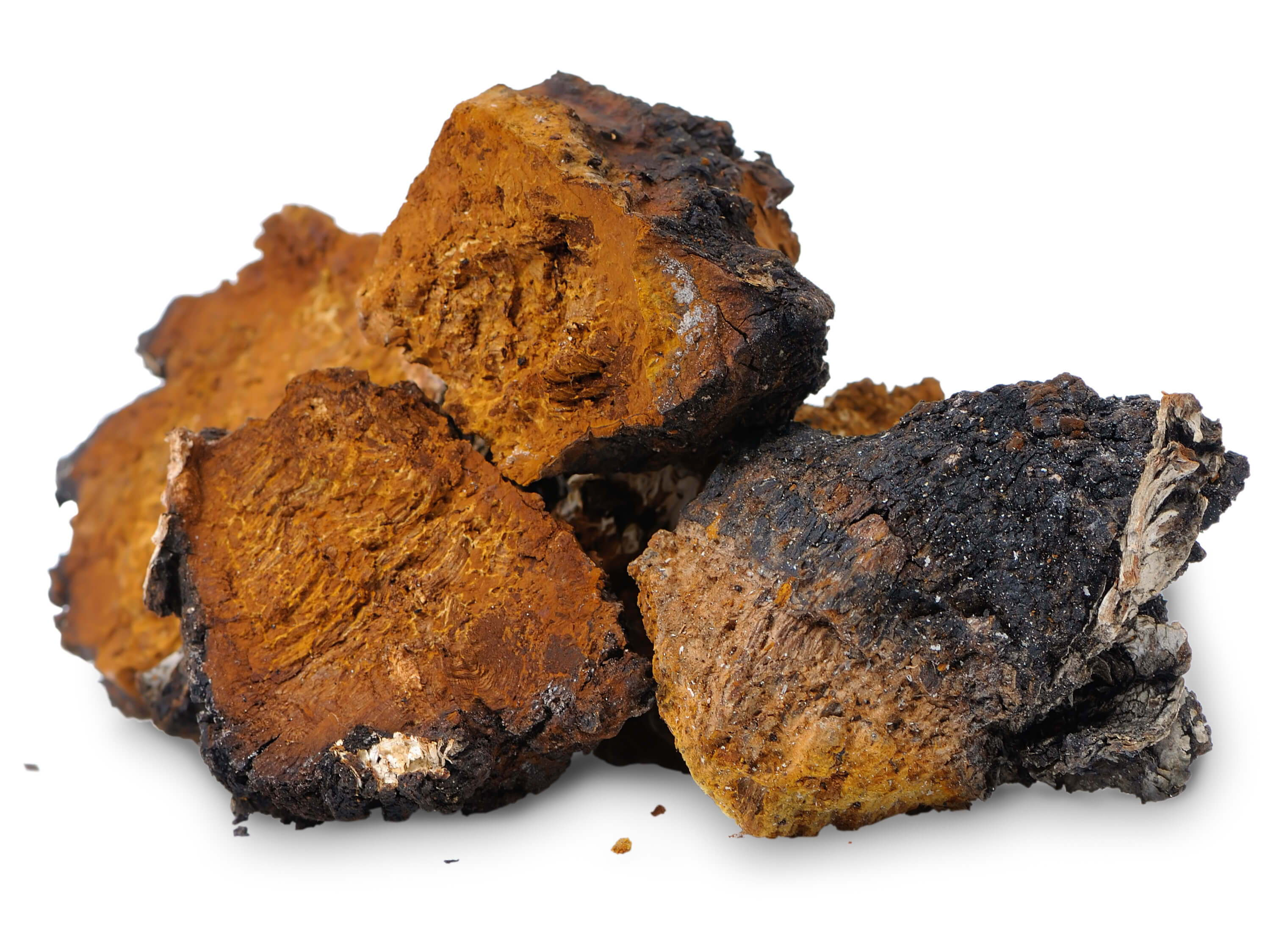 Chaga Mushrooms: 3 Ways This Mushroom May Benefit Your Health ...