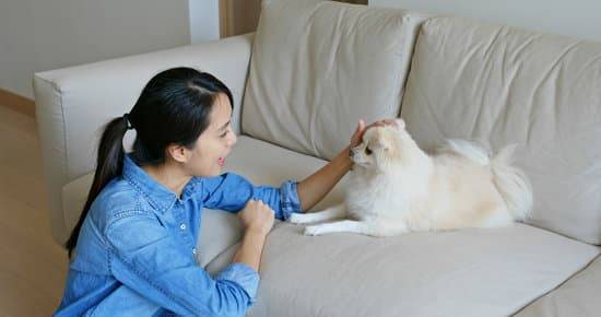 A woman pets a small white dog as it sits on the couch