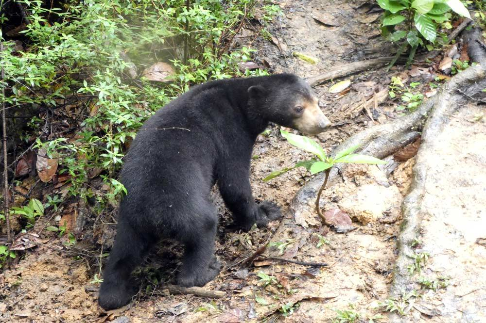 Travelbay Borneo Tours - Neil & Fiona in Borneo - Customer Review - Bornean Sun Bear Conservation Centre
