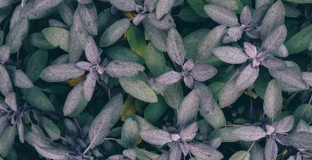 Clinical European Herbal Medicine