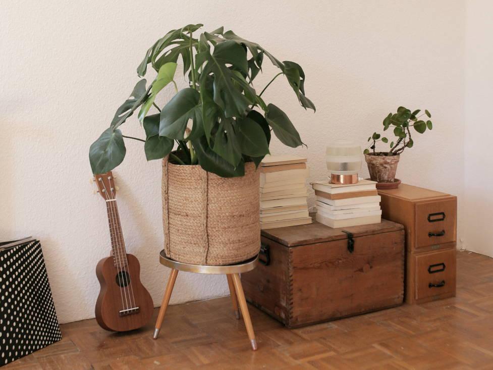 Vintage-Möbel mit Pflanzen