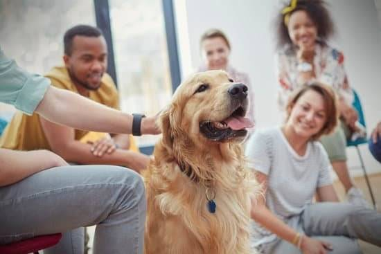 A golden retriever in a group of people