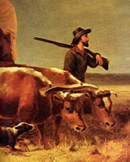 Pioneer man walking with oxen pulling covered wagon