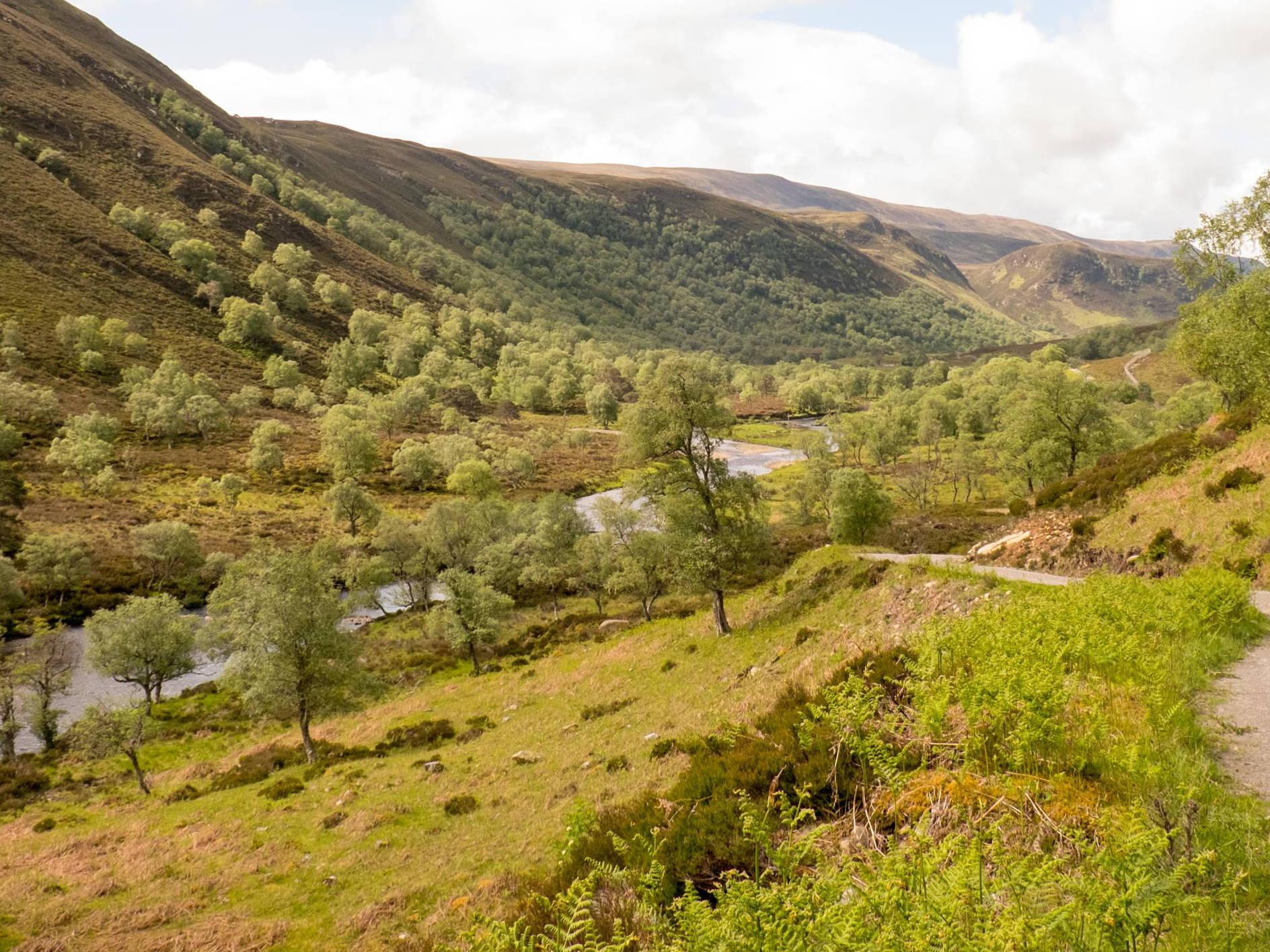 Green birchwoods carpet Glen Mor