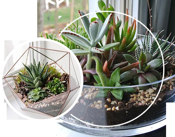 An example of a terrarium