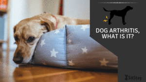 Dog Arthritis. What Is It?