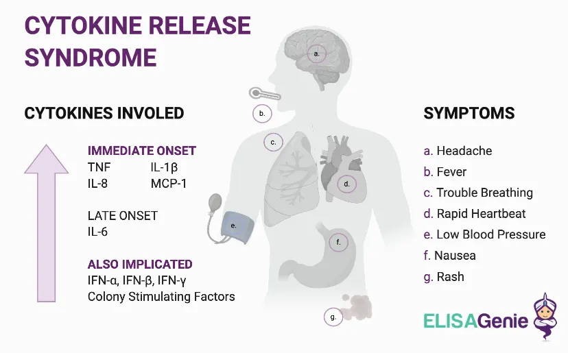 Cytokine release syndrome image with symptoms, and early and late onset cytokines.