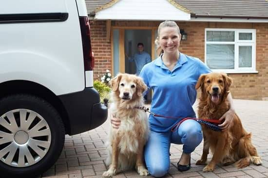 Two Golden Retrievers sitting next to a woman wearing a blue collard shirt and jeans
