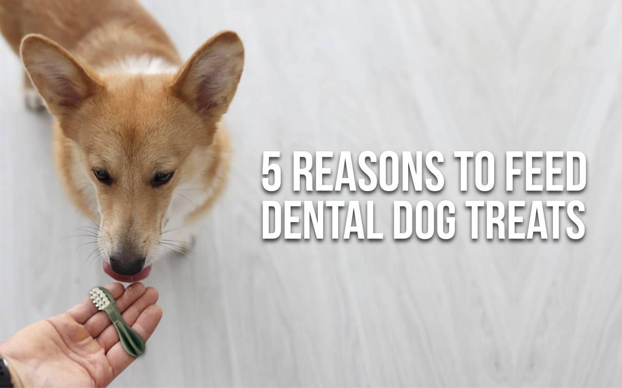 5 reasons to feed dental dog treats | Pawpy Kisses Blog Pets Talk