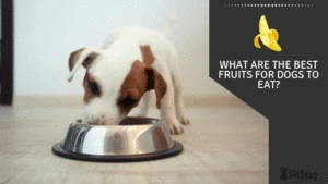 What are the best fruits for dogs to eat?