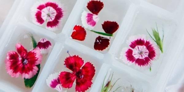 Essbare Blüten zubereiten