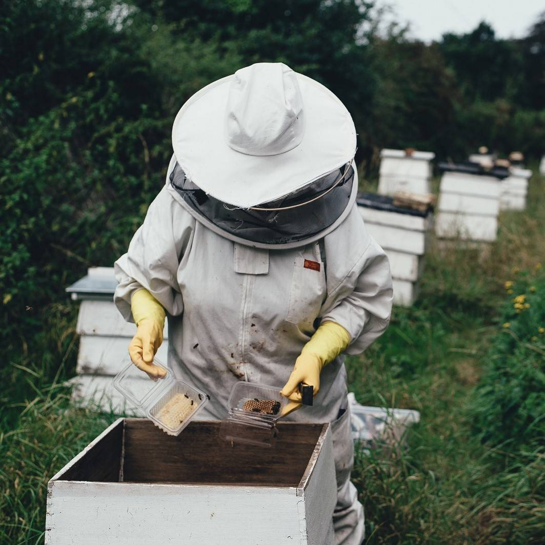 A beekeeper checking a hive