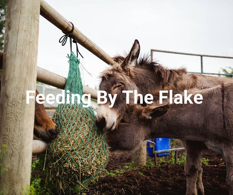 Feeding By The Flake