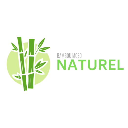 Bambou Moso Naturel
