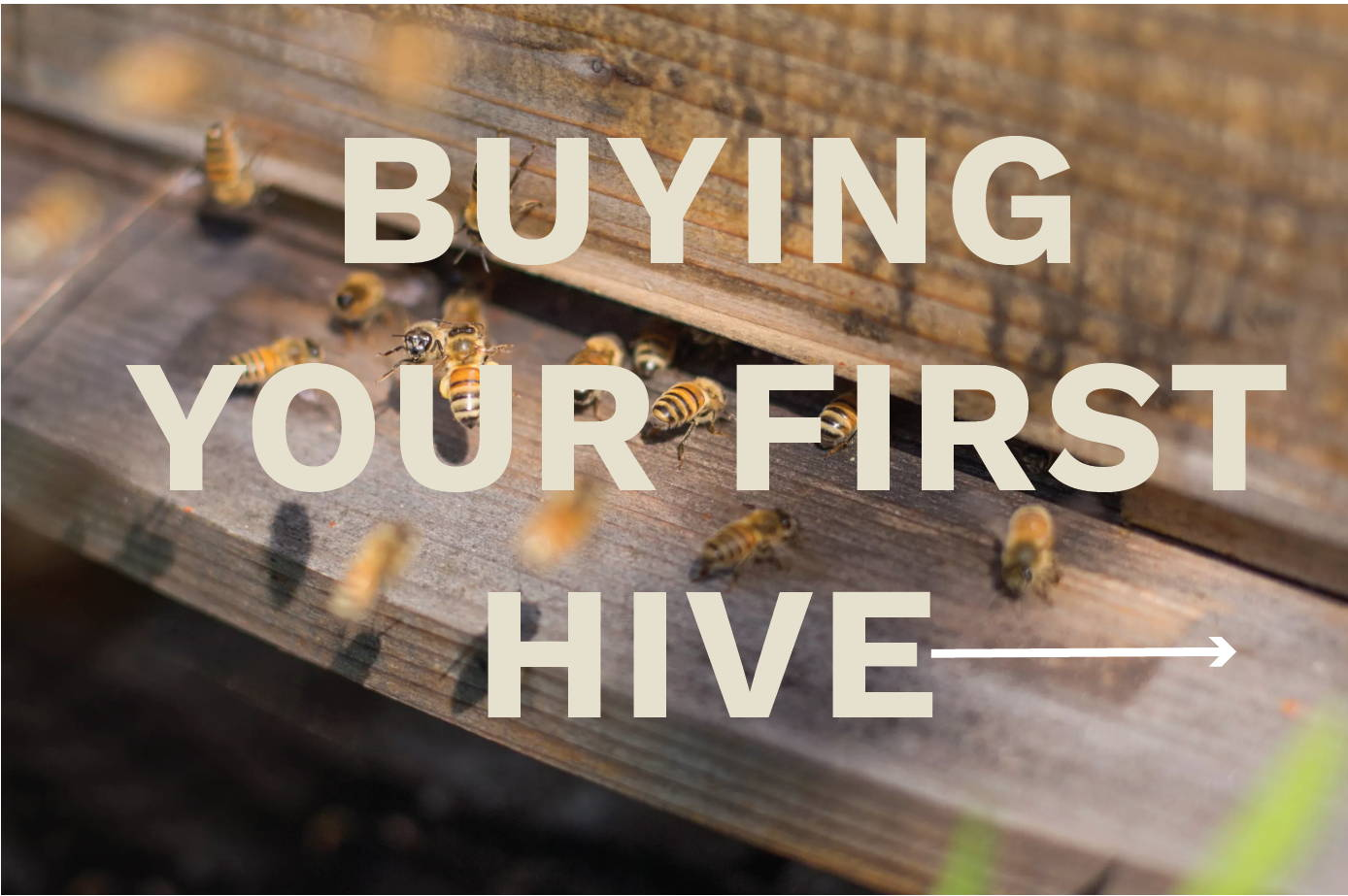 Click to learn more about buying your first hive.
