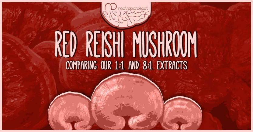 Red Reishi Mushroom: Comparing Our 1:1 and 8:1 Extracts