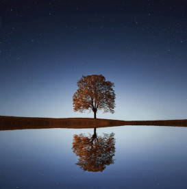 tree-reflecting-in-water-self-reflection