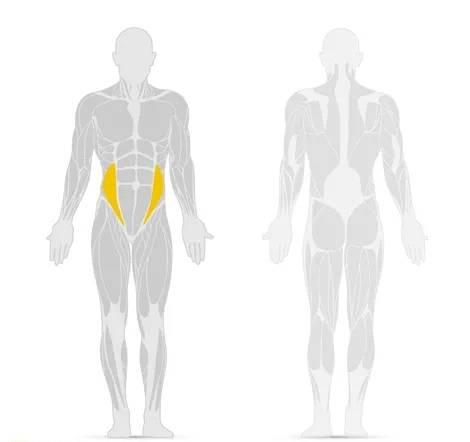 Rappresentazione del muscolo obliquo interno addominale