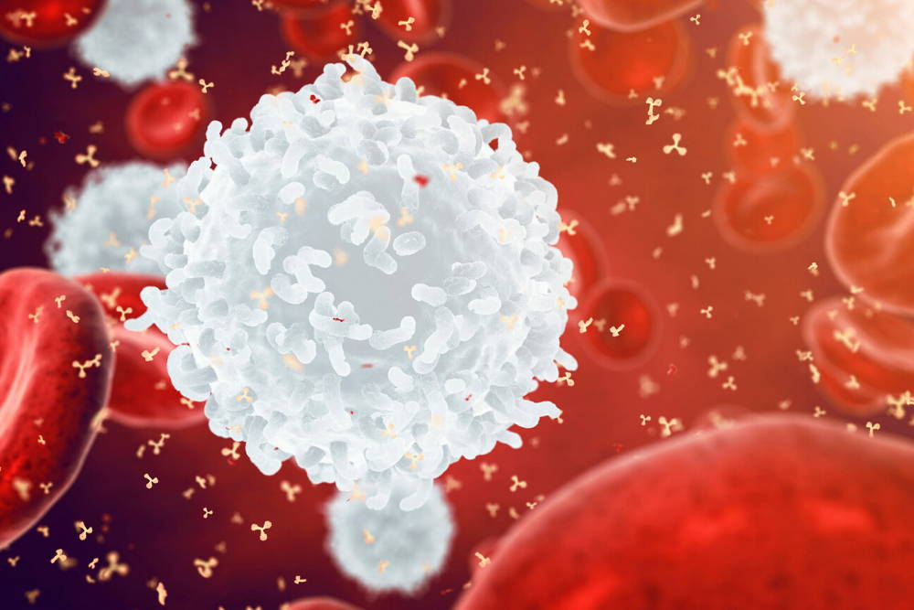 White blood cell||How to  improve white blood cells naturally