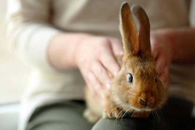 train bunny to sit